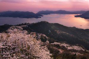 上島町・積善山の三千本桜