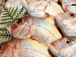 新鮮!瀬戸内海の魚介を味わい尽くせ!『旬・鮮・味まつり』